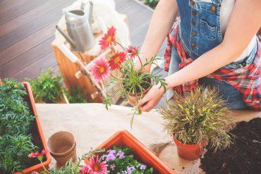 coltivare erbe aromatiche